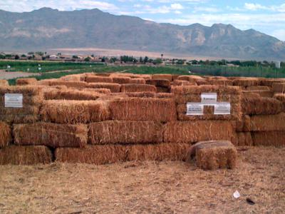 The Gilcrease Orchard Hay Maze